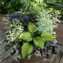 DIY Flower Garden Ideas 10 214x214 - 35+ Easy DIY Flower Garden Ideas