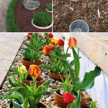 DIY Flower Garden Ideas 14 214x214 - 35+ Easy DIY Flower Garden Ideas