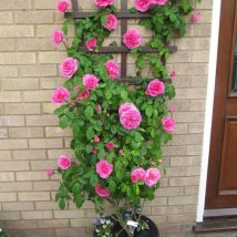 DIY Flower Garden Ideas 25 214x214 - 35+ Easy DIY Flower Garden Ideas