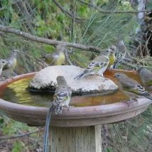 Diy Birdbath Projects 25 214x214 - 30+ Cute DIY Bird Bath Ideas To Enhance Your Garden